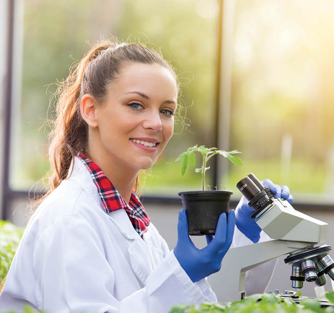 A scientist working with a microscope and plant sample