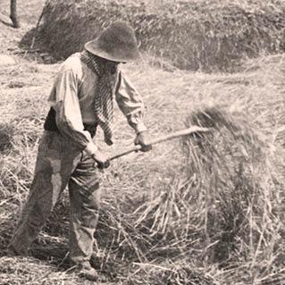 1852: A farmer shoveling hay