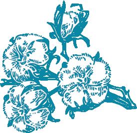 1656: Cotton plants